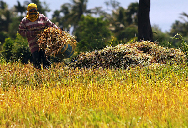 Agriculture posted a 2.20 percent growth rate in the fourth quarter of 2017, rebounding from the 1.09 percent drop in the same period in 2016. The STAR/Edd Gumban, File photo