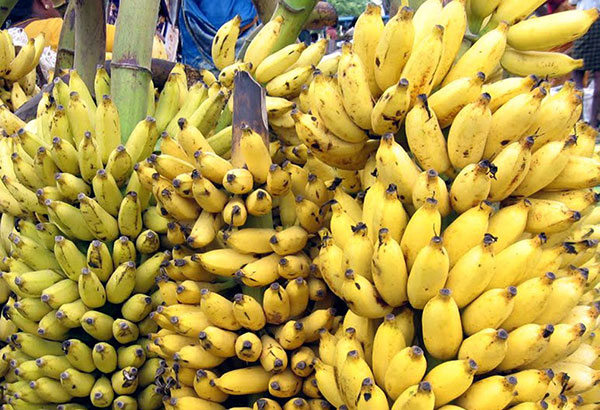 Among the agricultural products for which the government will seek zero duties and no quotas are bananas and pineapples. File photo
