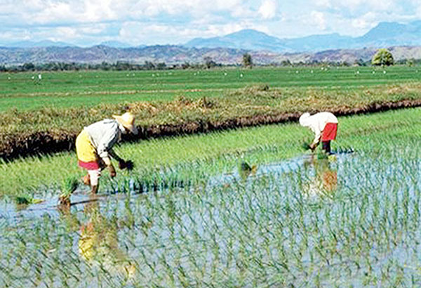 agriculture contribution shrinking in asean agriculture business
