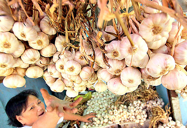 A vendor arranges garlic from Ilocos at a market stall in Baguio City. The Philippines is heavily dependent on imports because local garlic producers only contribute 7 percent to the country's supply. ANDY ZAPATA JR., file