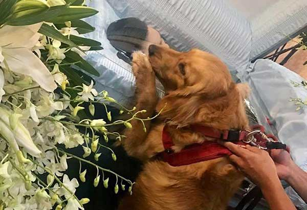 Photo posted on Facebook by Horacio Castillo's uncle shows the UST law student's Golden Retriever beside his coffin at the Santuario de San Antonio in Forbes Park, Makati.