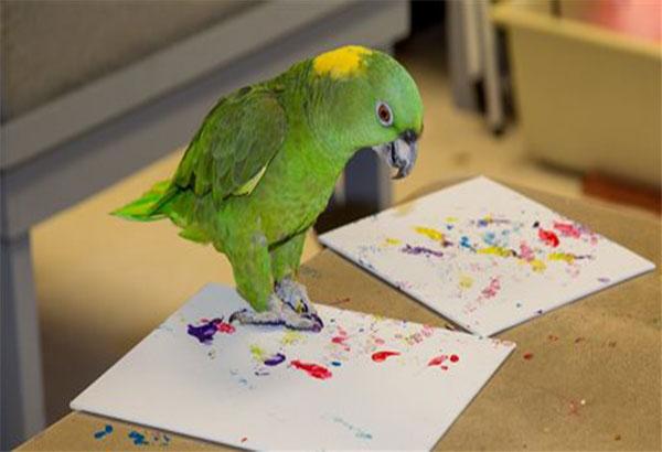 Zool Auction