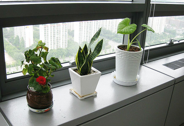 Why You Should Keep Plants In The Office Health And Family