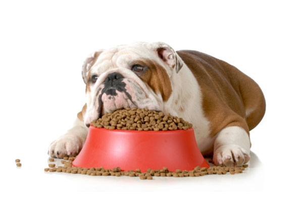 5 Reasons Why Your Pet Won T Eat Its Food Pet Life