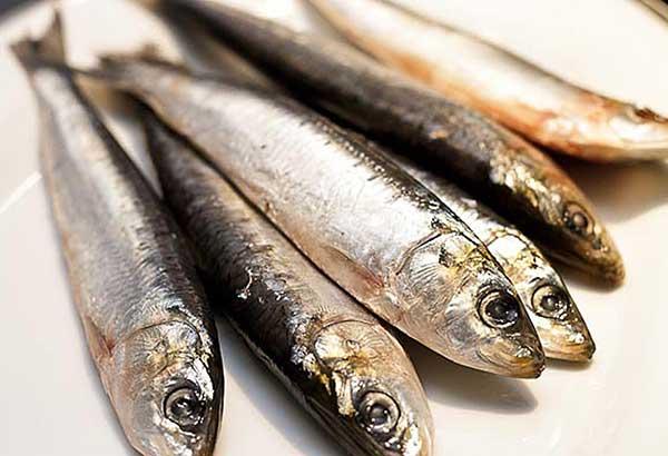 Sardines-3.jpg