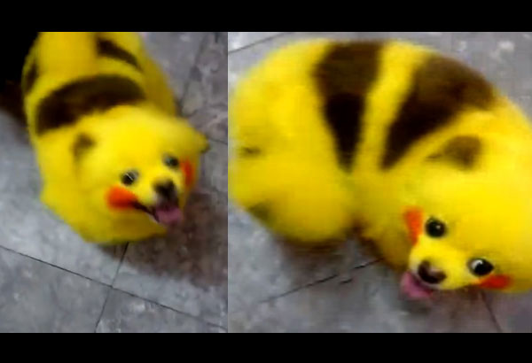 Cat Painted Like Pikachu