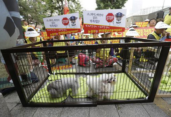 """In this June 24, 2016, photo, pet dogs are seen in a cage as puppy farmers stage a rally criticizing the media reports and demanding measures to save their endangered businesses near the National Assembly in Seoul, South Korea. South Korean dog farmers face plummeting prices for puppies and massive public criticism after media reports alleging shocking acts of cruelty at a handful of farms. Some farmers say they are near collapse because of media reports that failed to represent the overall picture. The banners read """"Same livestock laws for cows, pigs and pet dogs? and Ministry of Agriculture and Forestry should make companion law!"""" AP/Ahn Young-joon"""