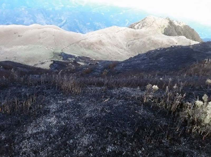 BFP: 140K hectares of forest in Cordillera damaged in fires