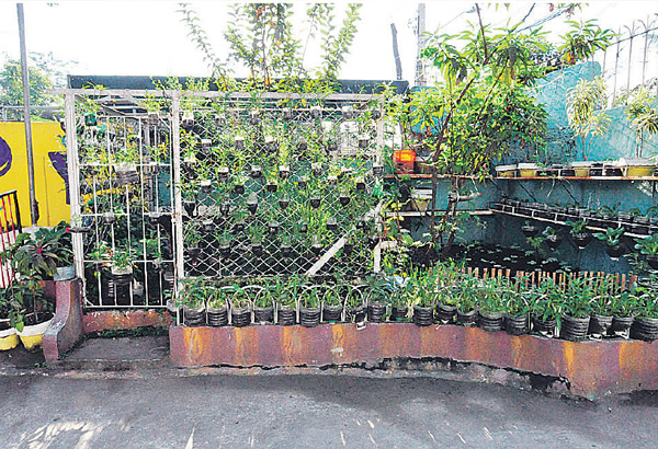 Gardening Ideas For Schools ideas for school gardens The Urban Garden At P Manalo Elementary School In Pateros Urban Vegetable Gardens Not Only Help Beautify Concrete Areas They Can Also Be A Source Of