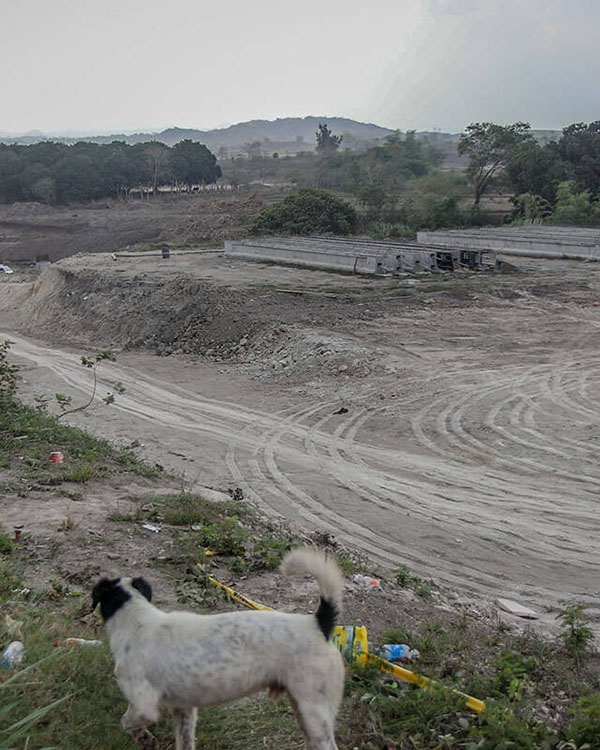 A dog stands on top of a hill overlooking a construction site that used to be a field planted with mango trees and other fruit-bearing trees.