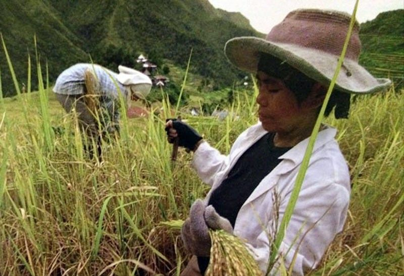 Female farm workers still get lower wages
