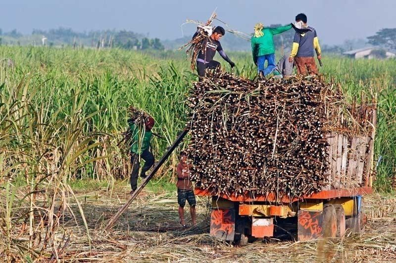 'Bungkalan' caused by unaddressed social injustice, land rights group says