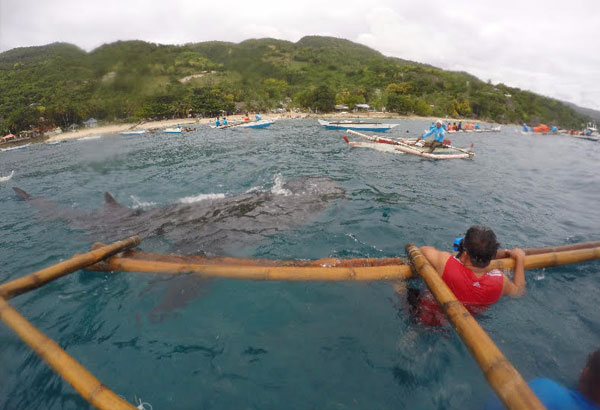 Plea to Miss Universe beauties: Don�t swim with whale sharks