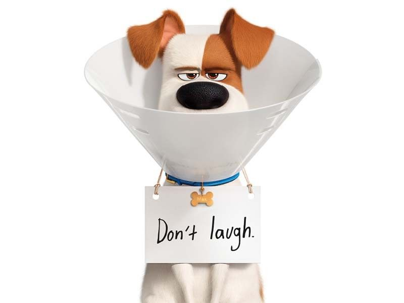 "Hero dog Max takes trip to the vet in 1st ""The Secret Life of Pets 2"