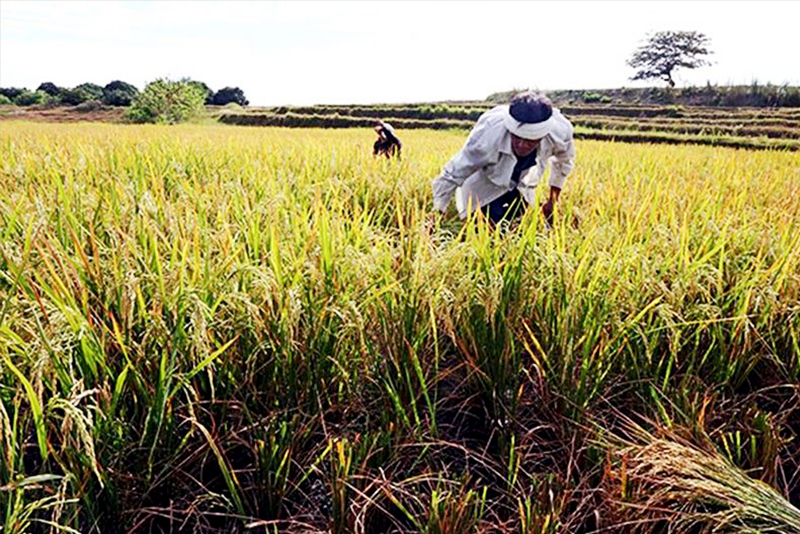 Questions as the new rice regime begins