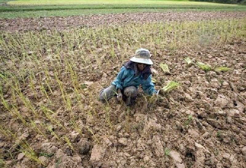Well-dressed thieves in Philippines agriculture