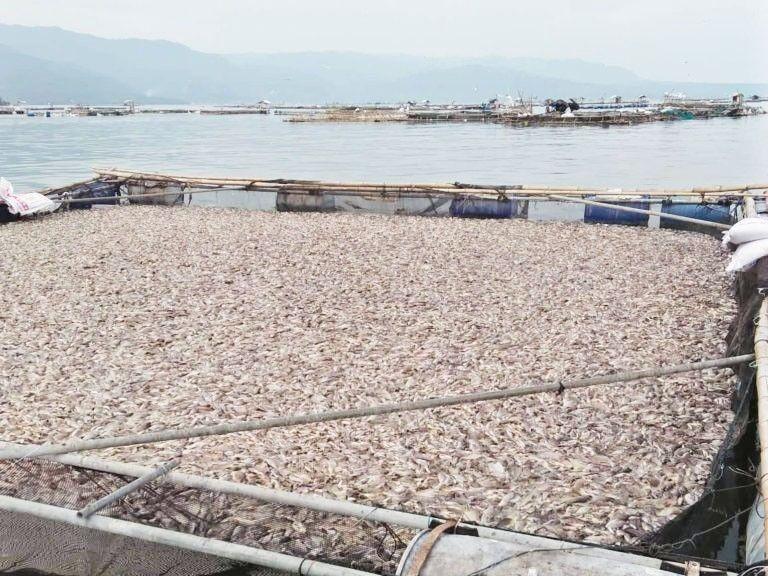 Duterte orders agencies to monitor Taal Lake fish kill, mitigate effects