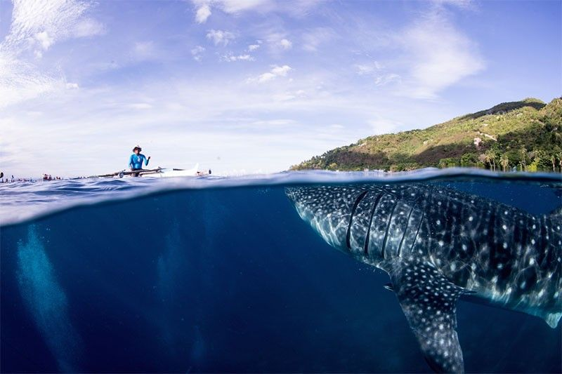 A village in Cebu discovered a win-win-win tourism formula, thanks to whale sharks