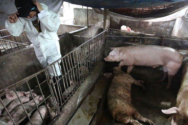 House asked to probe swine fever outbreak