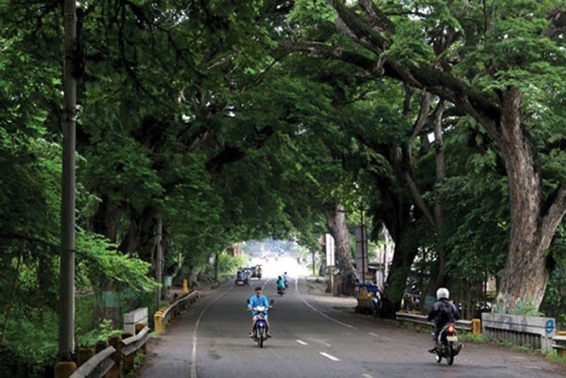 Vision to plant 3 meter trees starts on October 5