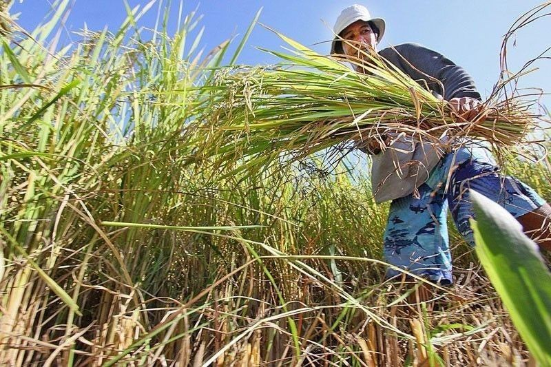 'Duterte apology of no help to farmers hit by low palay prices'