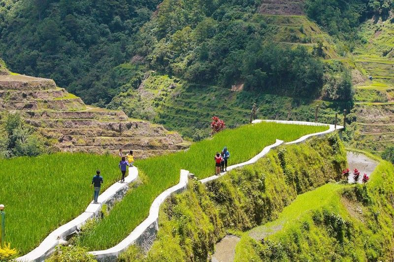 Ifugao governor disputes FAO on deterioration of rice terraces