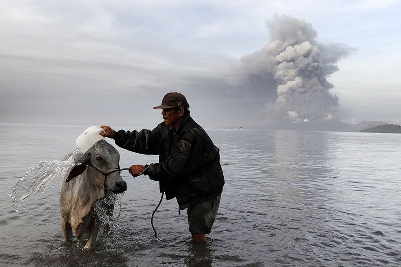 PETA asks for relief items for animals amid Taal eruption