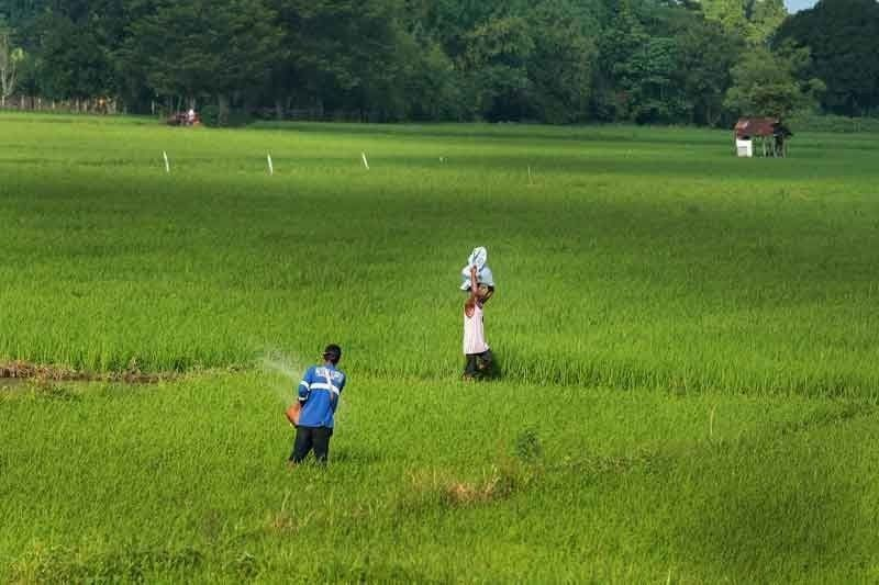 Additional rice imports to send wrong signal to farmers � FFF