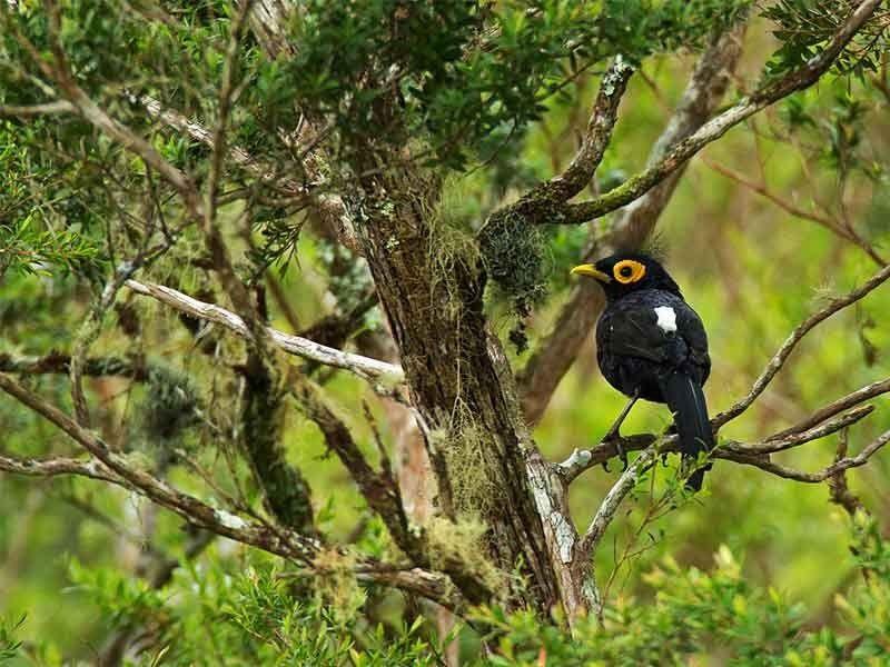 'Green' energy powers biodiversity