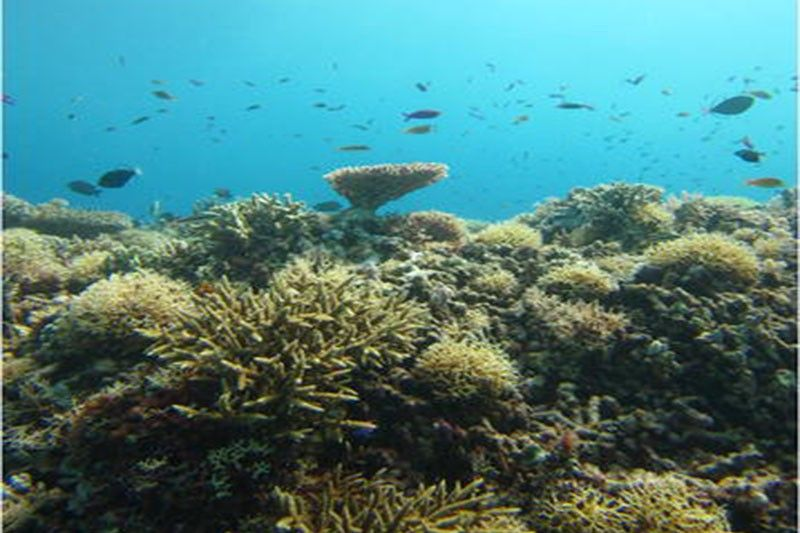 Lonely Planet names 3 Philippine sites among parks with 'surprisingly spectacular diving'