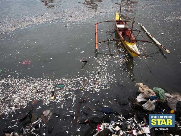 'Upwelling' due to rain likely cause of Manila Bay fish kill � BFAR