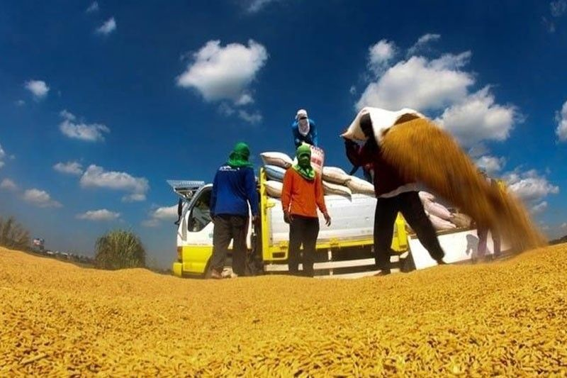Millennials encouraged to go into smart farming