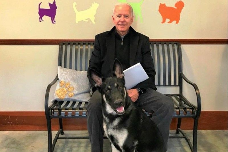 Biden's canine plans go to the dogs after 'biting incident'