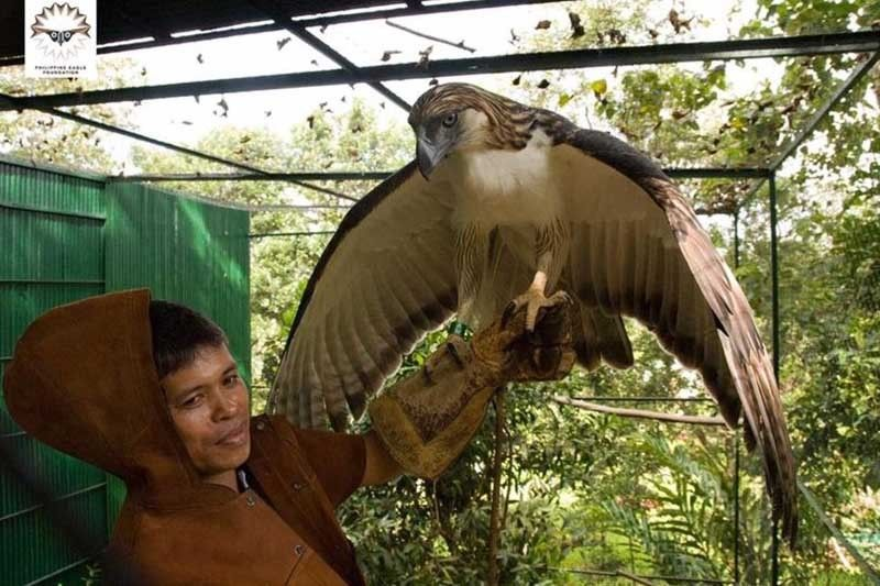 Philippine eagle Pag-asa, a conservation icon, dies