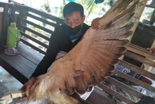Philippine eagle rescued in Sarangani