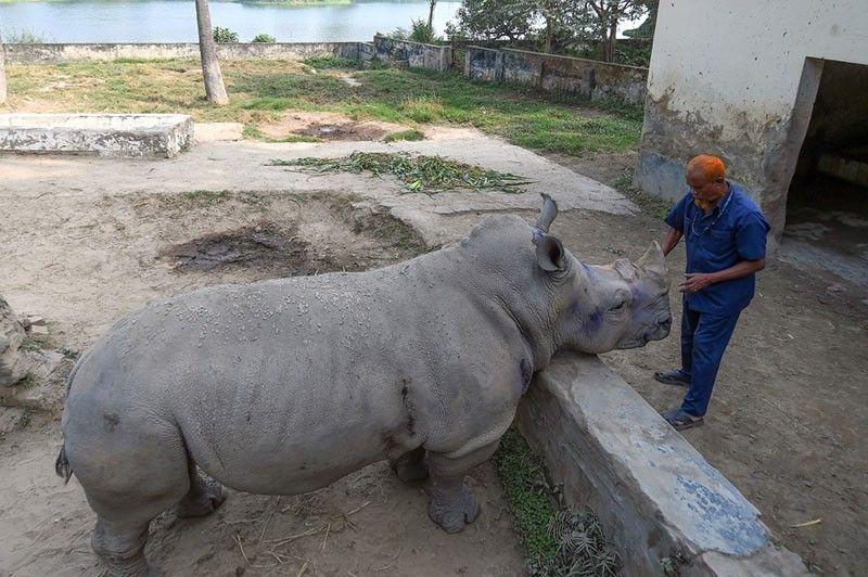 Zoo seeks mate for lonely Kanchi the Rhino in Bangladesh