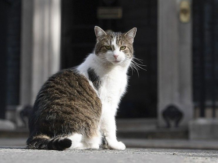Larry the Cat marks 10 years' ruling Downing Street roost in UK