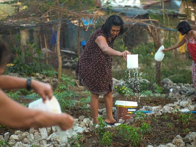 Urban poor community turns demolished homes into food security gardens