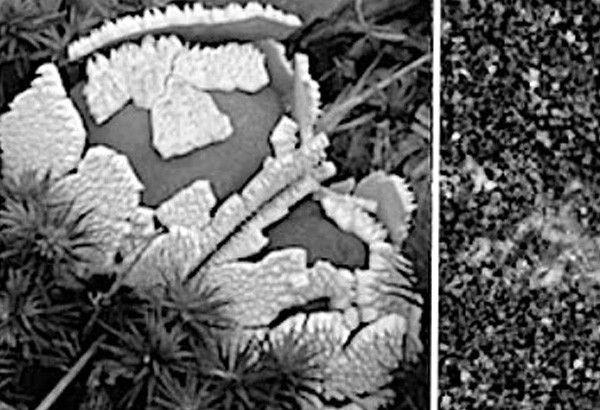 'Proof of life': Scientists claim they found mushroom on Mars
