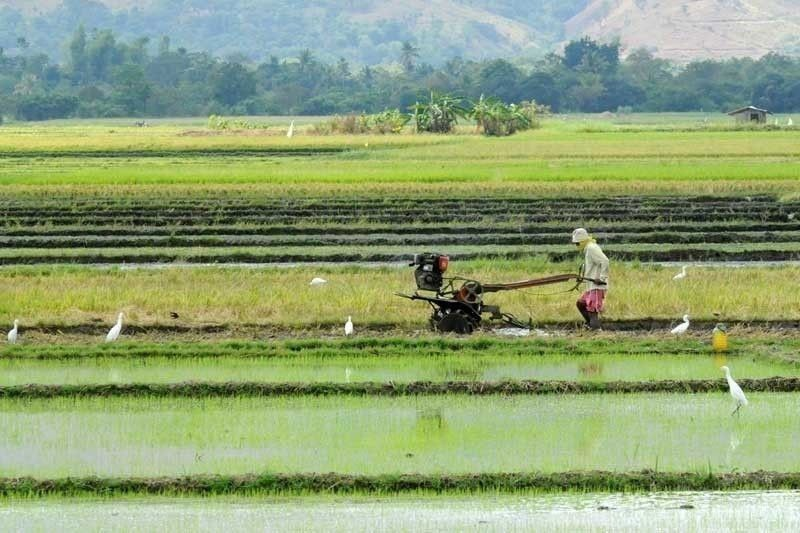Agriculture production falls 3.3% in Q1