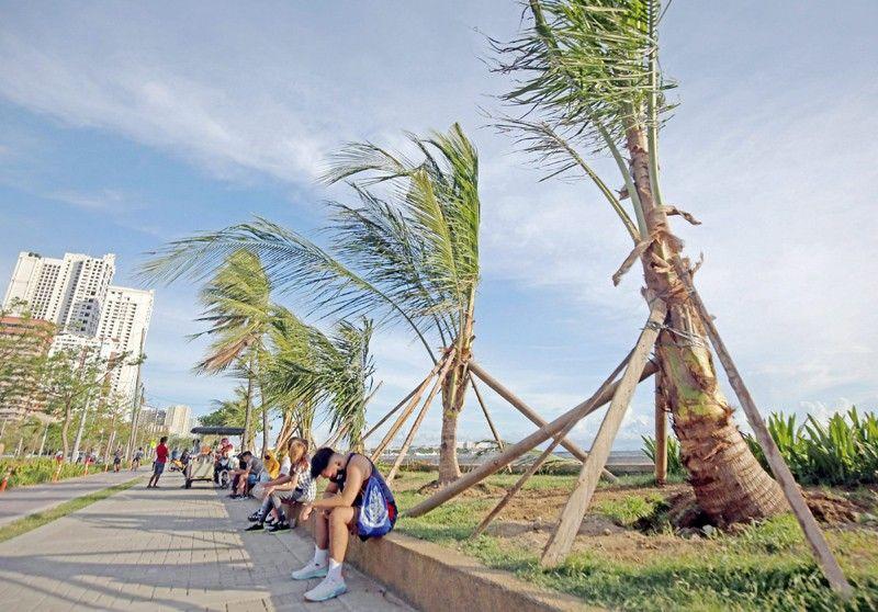 After white sand, Baywalk gets coconut palm tree makeover