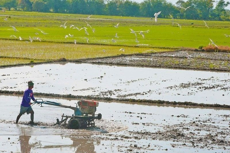 Philippines calls for more international, regional agriculture collaboration